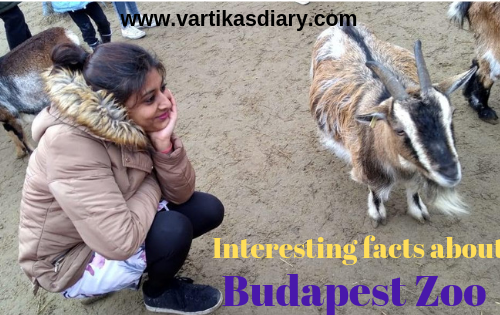 Interesting facts about the Budapest Zoo